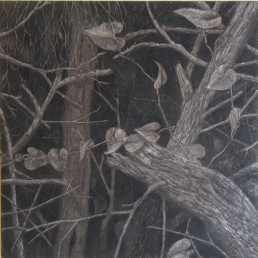 Trees in the darkness, charcoal on canvas, 70/70 cm, 2016