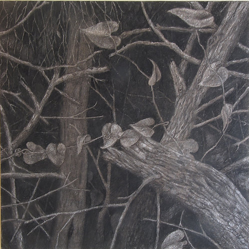 Trees in darkness 5