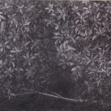 Trees in thedarkness,charcoal on canvas,50/70 cm, 2016