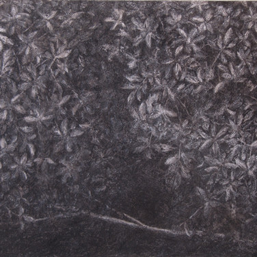 Trees in the darkness, charcoal on canvas,50/70 cm, 2016