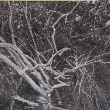 Trees in the darkness, charcoal on canvas, 52/60 cm, 2016