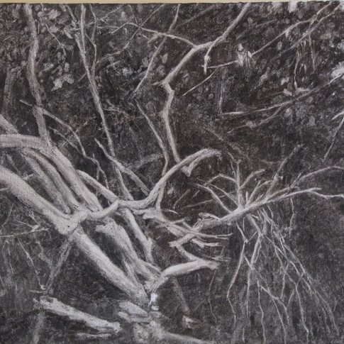 Trees in thedarkness,charcoal on canvas, 52/60 cm, 2016