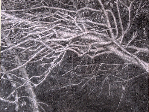 Trees in darkness 2