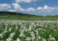 Prairie de Narcisses, Atlas de la biodiversité Est Cantal