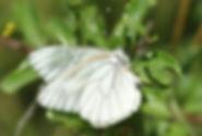Gazé, Atlas de la biodiversité Est Cantal
