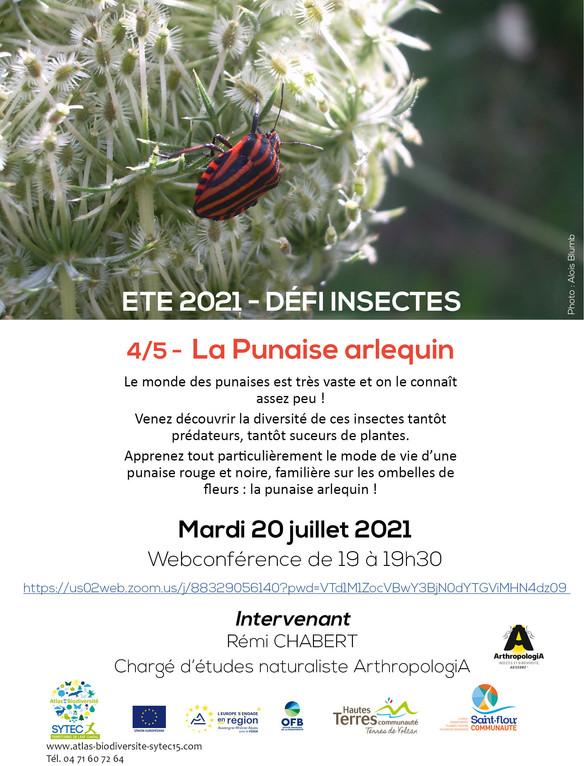 """Webconférences Série """"A la découverte des insectes"""" - La Punaise arlequin et Le Machaon"""