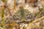 Hespérides tachetées, Atlas de la biodiversité Est Cantal