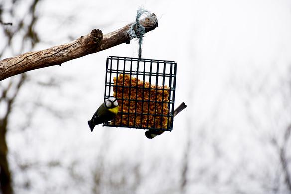Préparer ses mangeoires à oiseaux