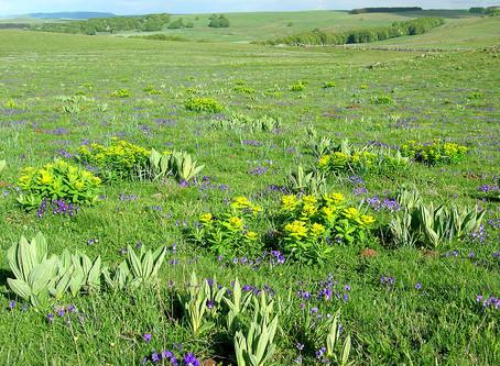 Les Mercredis de la Biodiversité - Fiers de nos prairies