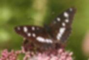 Sylvains, Atlas de la biodiversité Est Cantal