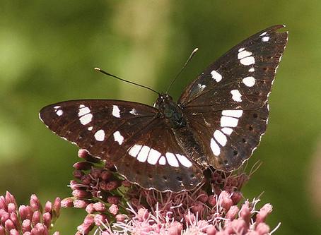 Mercredis de la biodiversité - Rencontrons nos papillons !