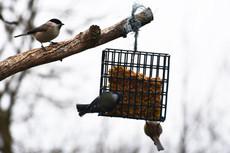 Comptage des oiseaux des jardins : week-end des 30 et 31 janvier 2021