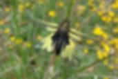 Ascalaphes, Atlas de la biodiversité Est Cantal