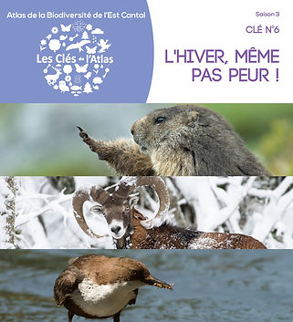 COUVERTURE CLE 6.jpg
