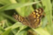 Tircis, Atlas de la biodiversité Est Cantal