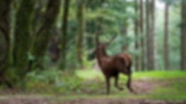 Cerf élaphe courant, Atlas de la biodiversité Est Cantal | Espèces emblématiques dans nos loisirs | Cerf