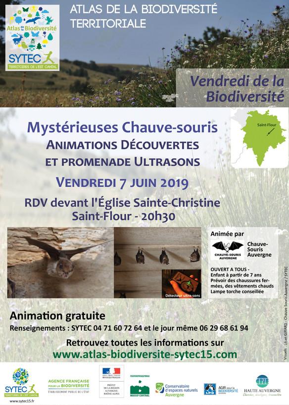 Animation Découverte « Mystérieuses Chauve-Souris »