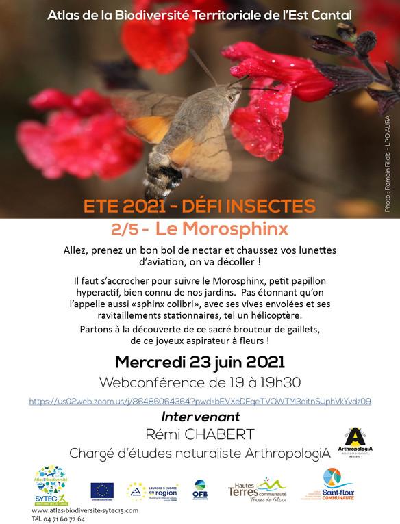 WEBCONFERENCE : Les insectes - Le Morosphinx - Mercredi 23 juin 2021