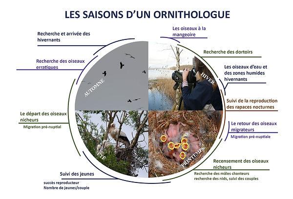 DIAPO OISEAUX SAISONS.jpg