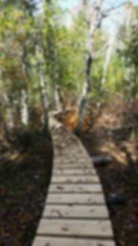 fogg island bridge.png
