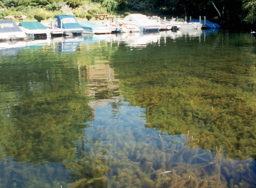 Battle Continues Against Variable Milfoil