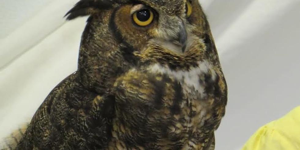 Chewonki - Owls of Maine