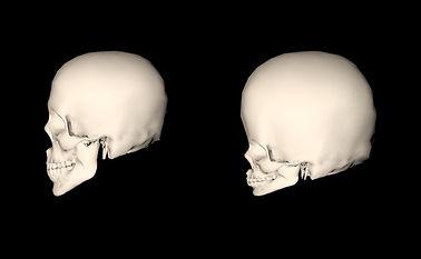 skulls-side_edited.jpg