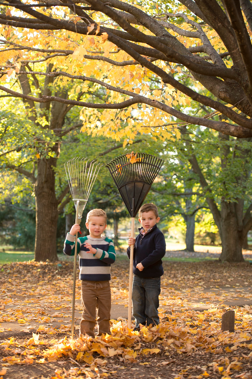 Lots of leaves to rake!
