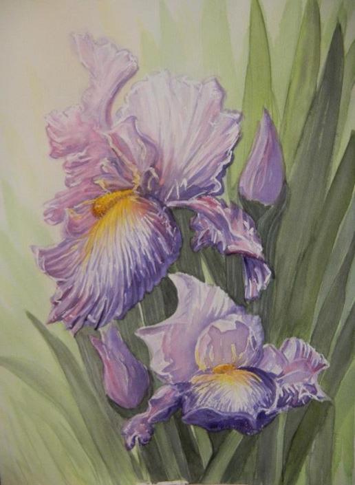 Purple Iris duo 2013_edited