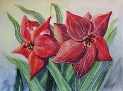 Red Lily Study