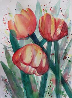Tulip |Trio