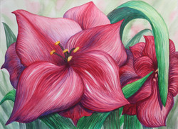More Red Lilies