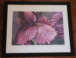 watercolour, _Iris Interpretation_.jpg