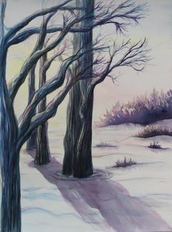 Winter's Colours
