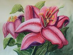Pink Stagazer Lilies Intense