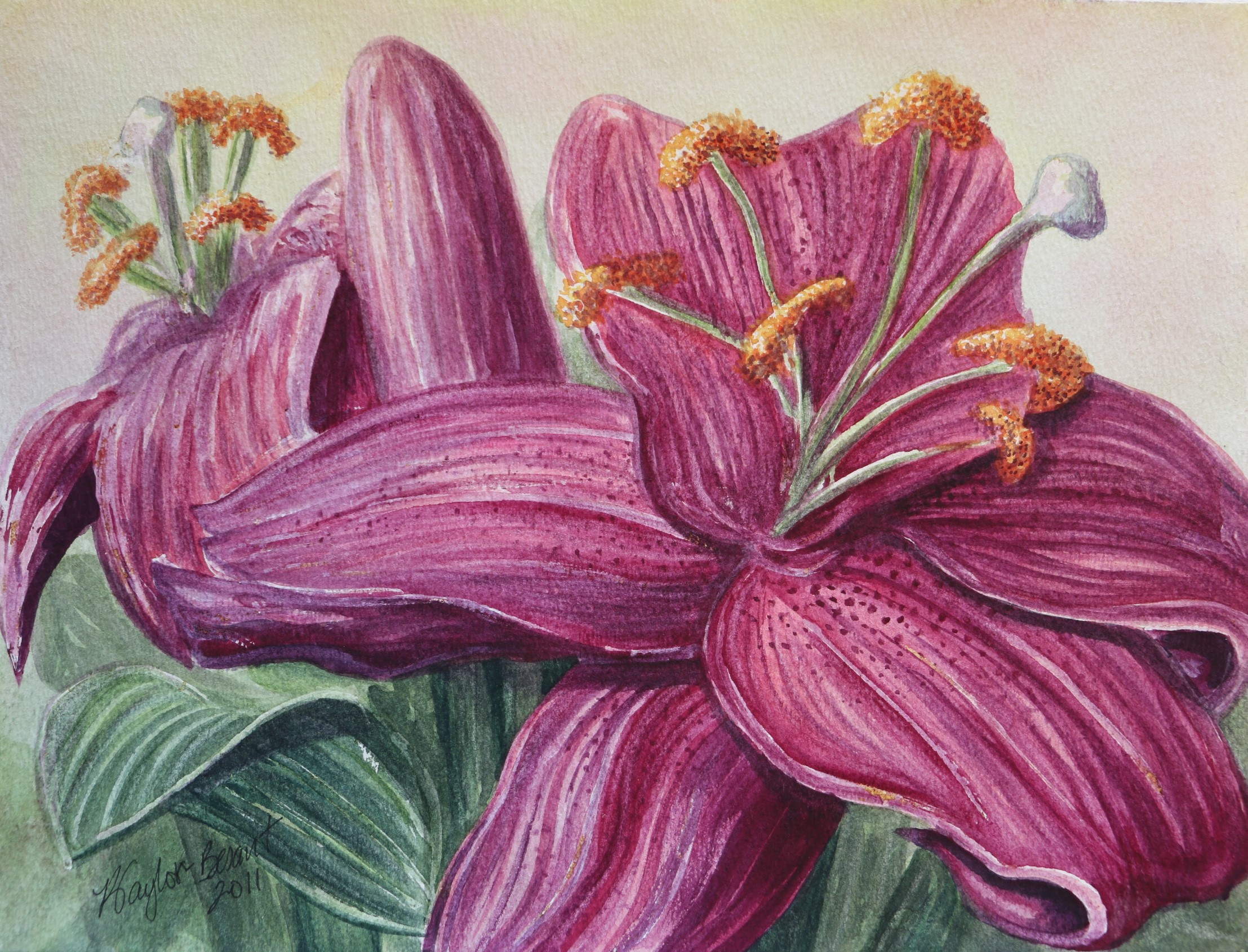 Red Violet Lilies Study
