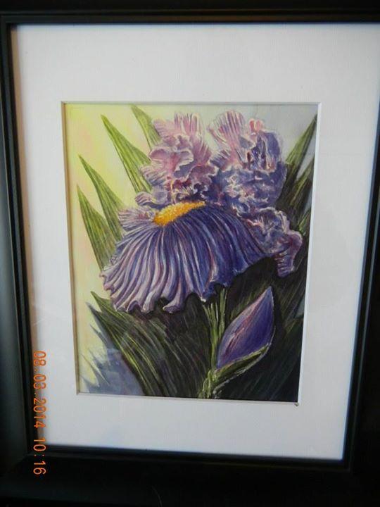 Irises Again
