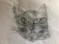 art - pencil drawing of a cat.jpeg