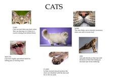 science - anatomy of cats.jpeg
