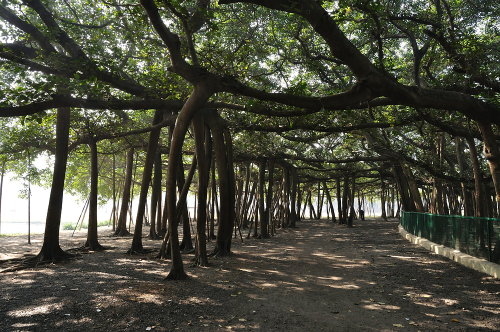 Offbeat Places to visit in Kolkata | Things to See in Kolkata | Great Banyan Tree in Shibpur Botanical Garden