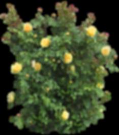 plantas con flores, png (4).png