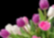tulip-border-clipart-63452.png