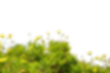 Ground-PNG-Transparent-Picture.png