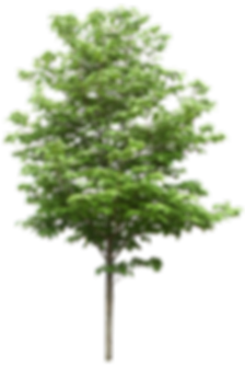 —Pngtree—trees_482736.png