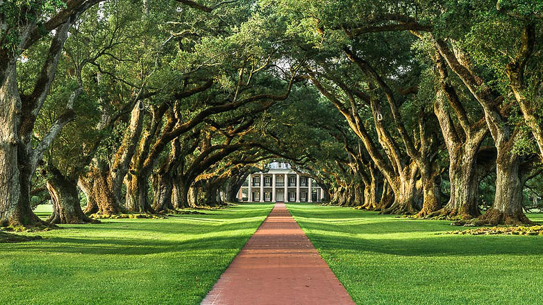 oak-alley-plantation-and-southern-live-o