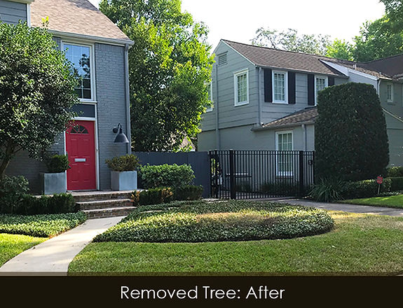 magnolia tree removal_after.jpg