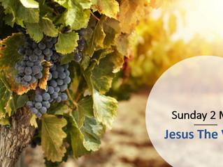 Jesus The Vine Sunday May 2nd 2021