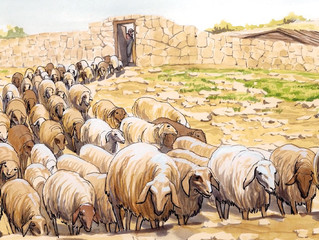 Sunday 25 April 2021 - The Good Shepherd