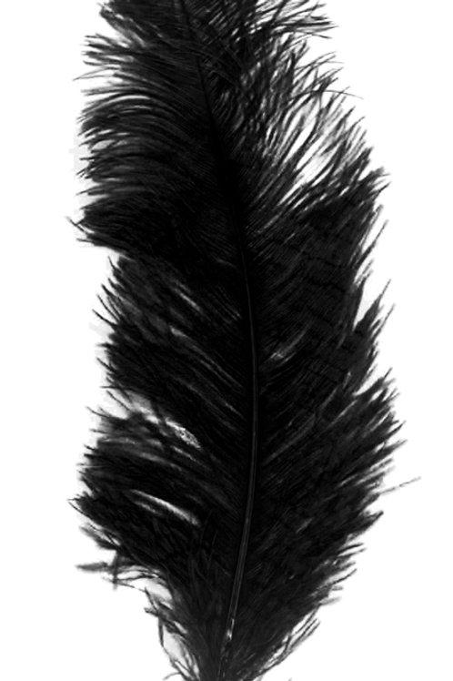 Location grandes plumes d'autruche noires