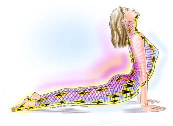 Your Fascia & Yoga